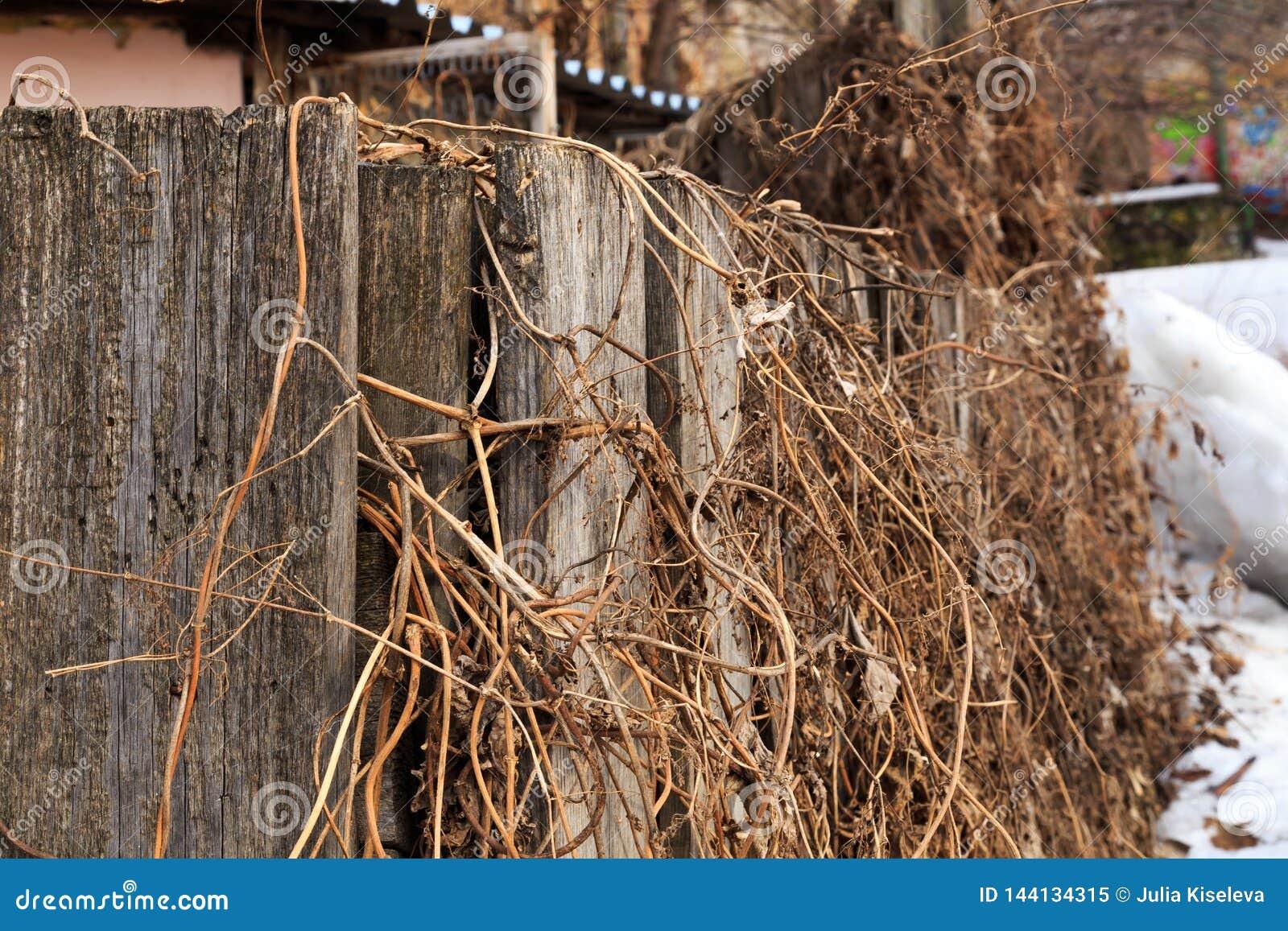 Oude houten die omheining met het droge gras van vorig jaar wordt ineengestrengeld