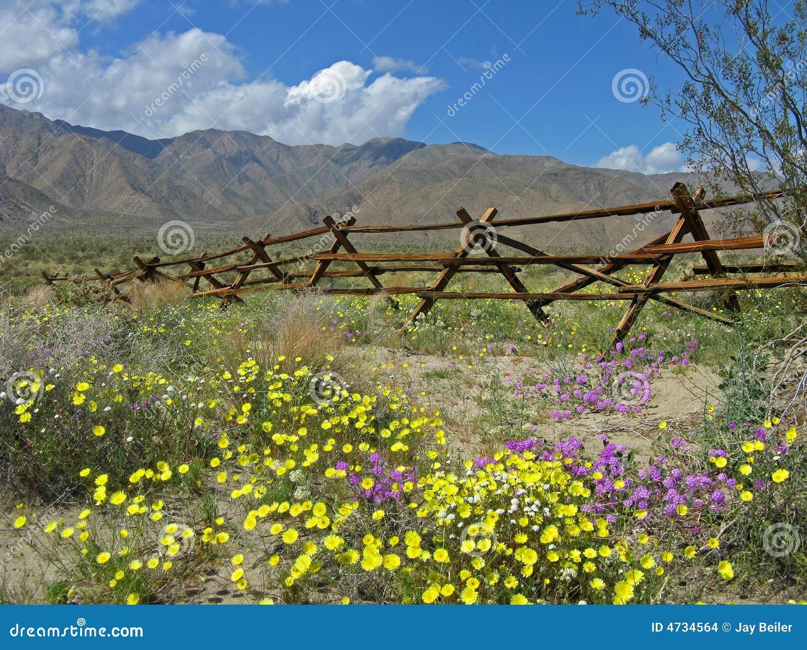Oude omheining, woestijnwildflowers