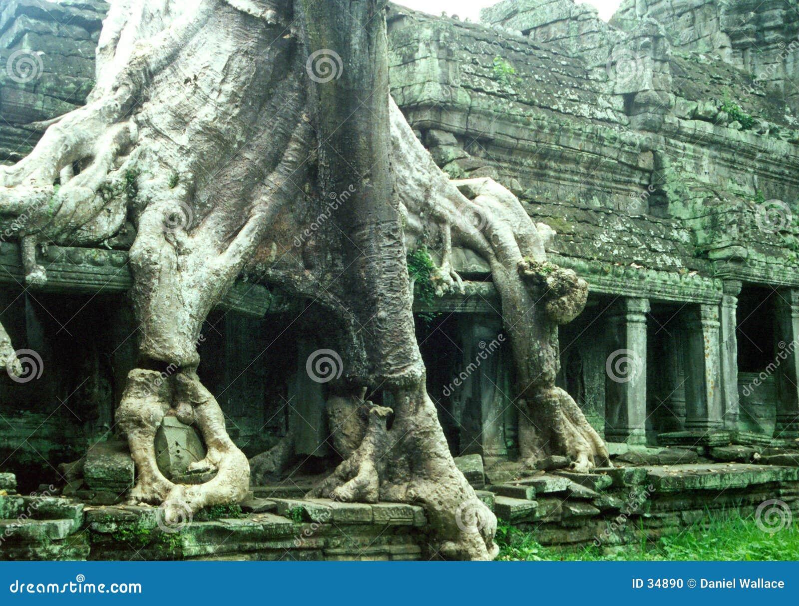 Oude overwoekerde tempel