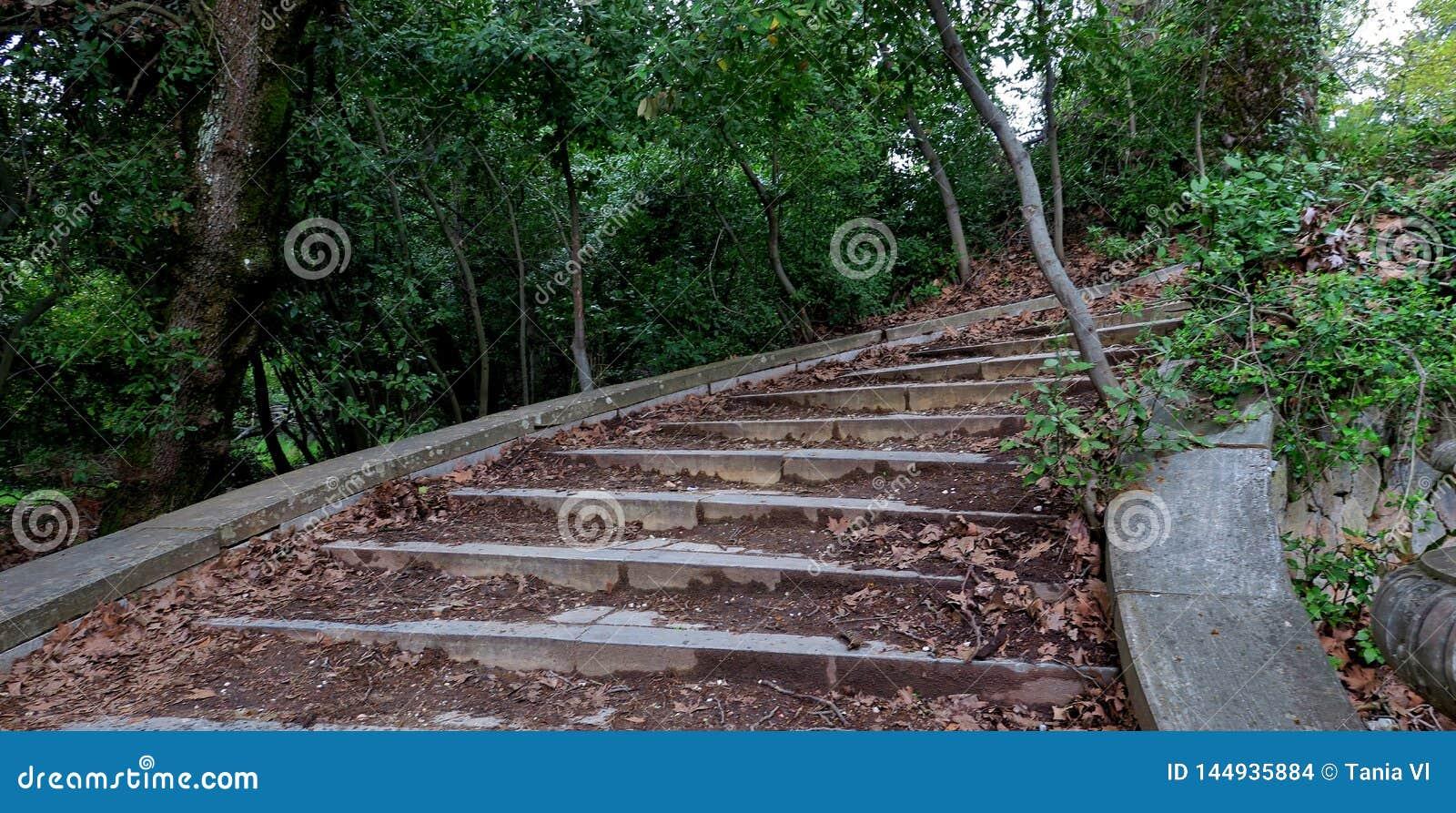 Oude stappen die in de diepten van het bos leiden