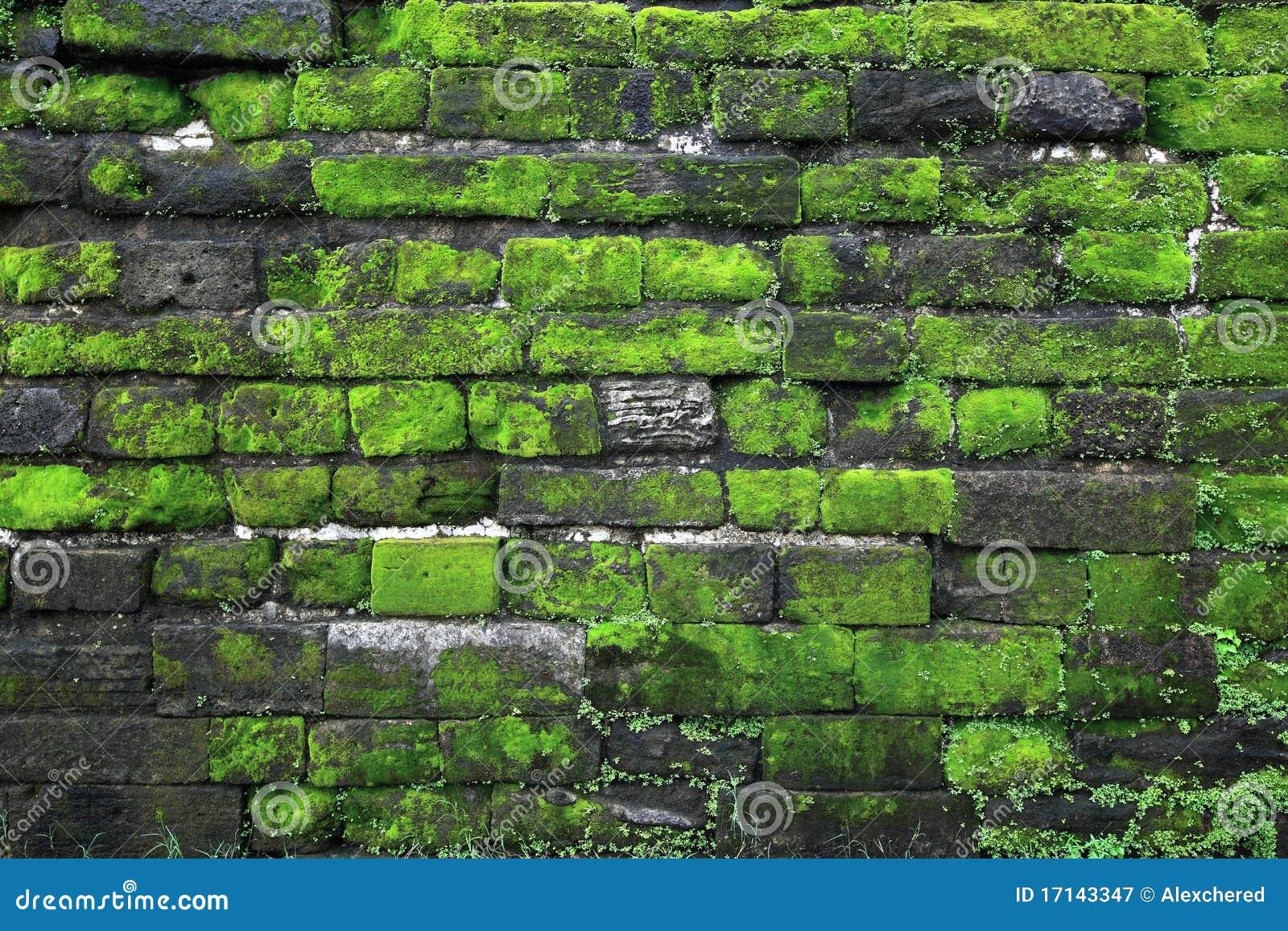 Oude steenmuur met groen mos