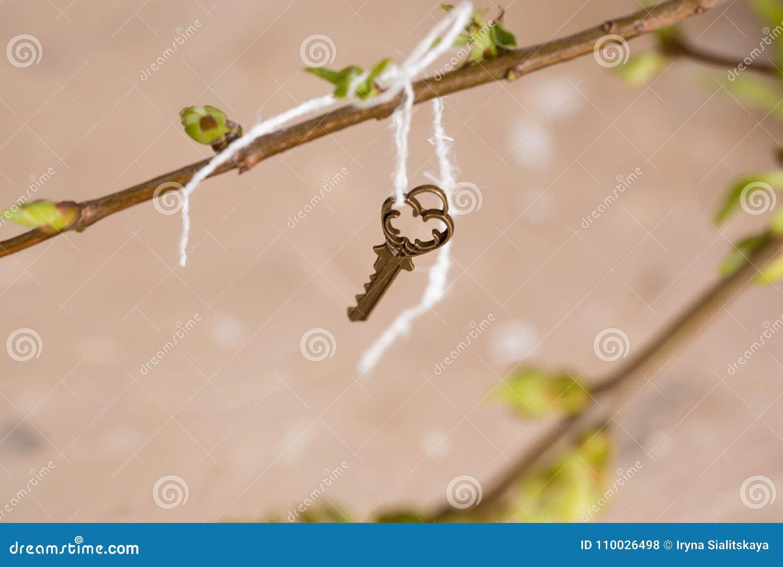 Oude uitstekende sleutel op een boomtak, groene jonge bladeren de lente en de zomervisie