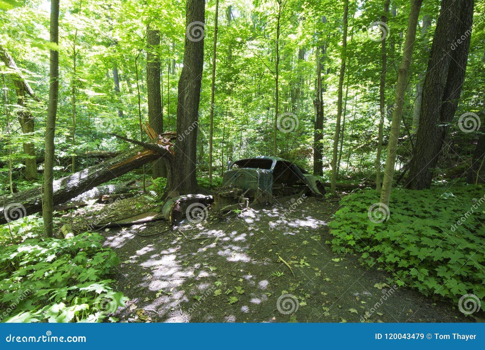 Oude verlaten auto in het bos