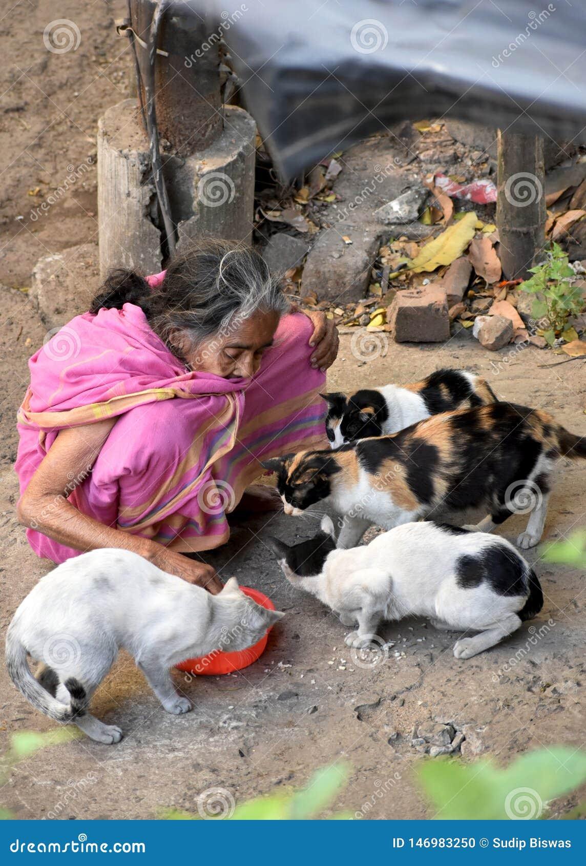Oude vrouwen voedende katten
