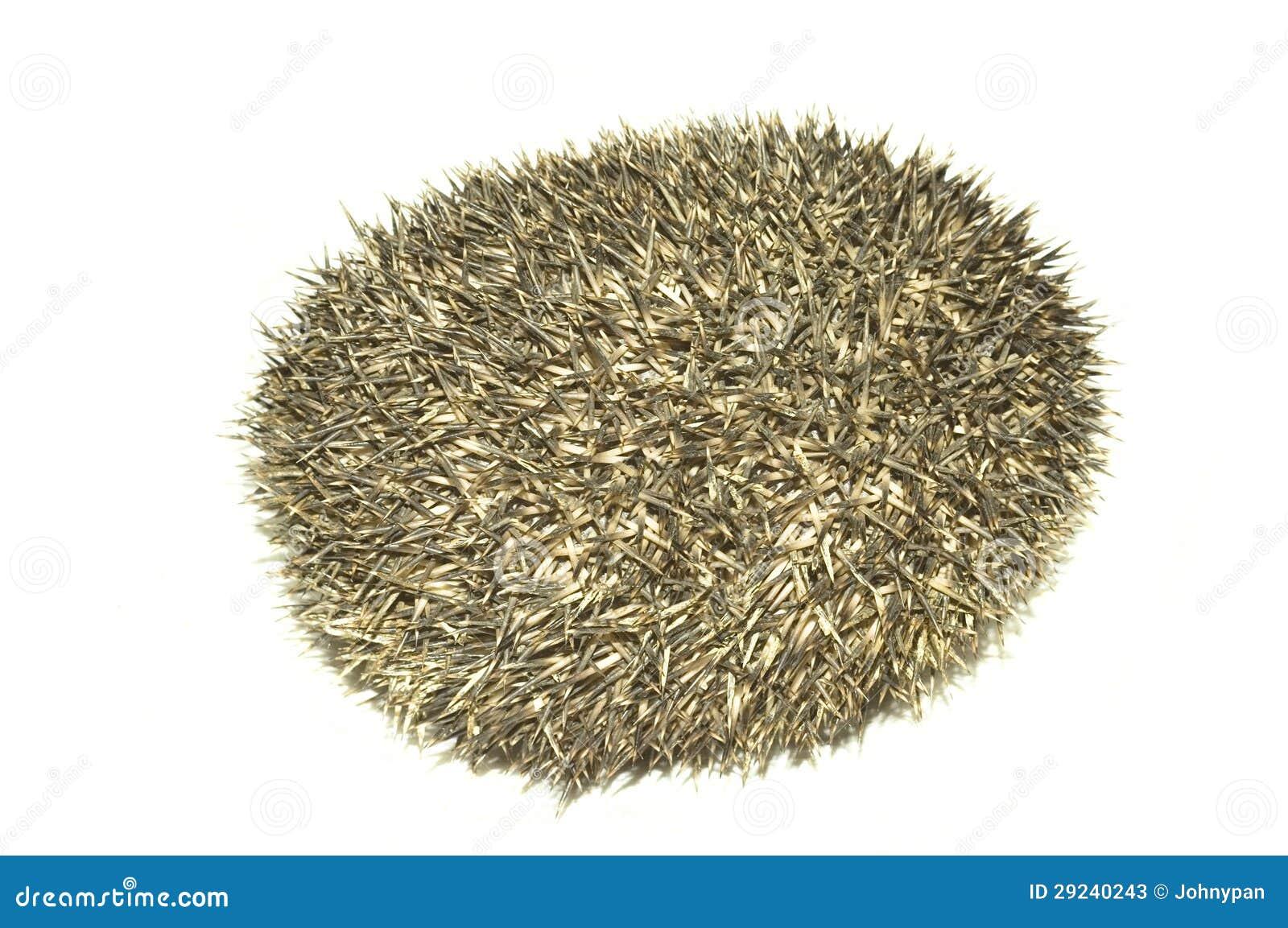 Download Ouriço imagem de stock. Imagem de animal, afiado, mamífero - 29240243
