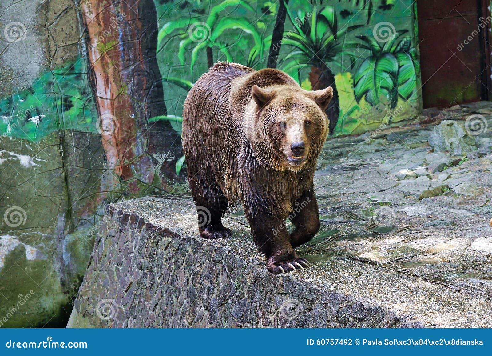 Ours dans le zoo