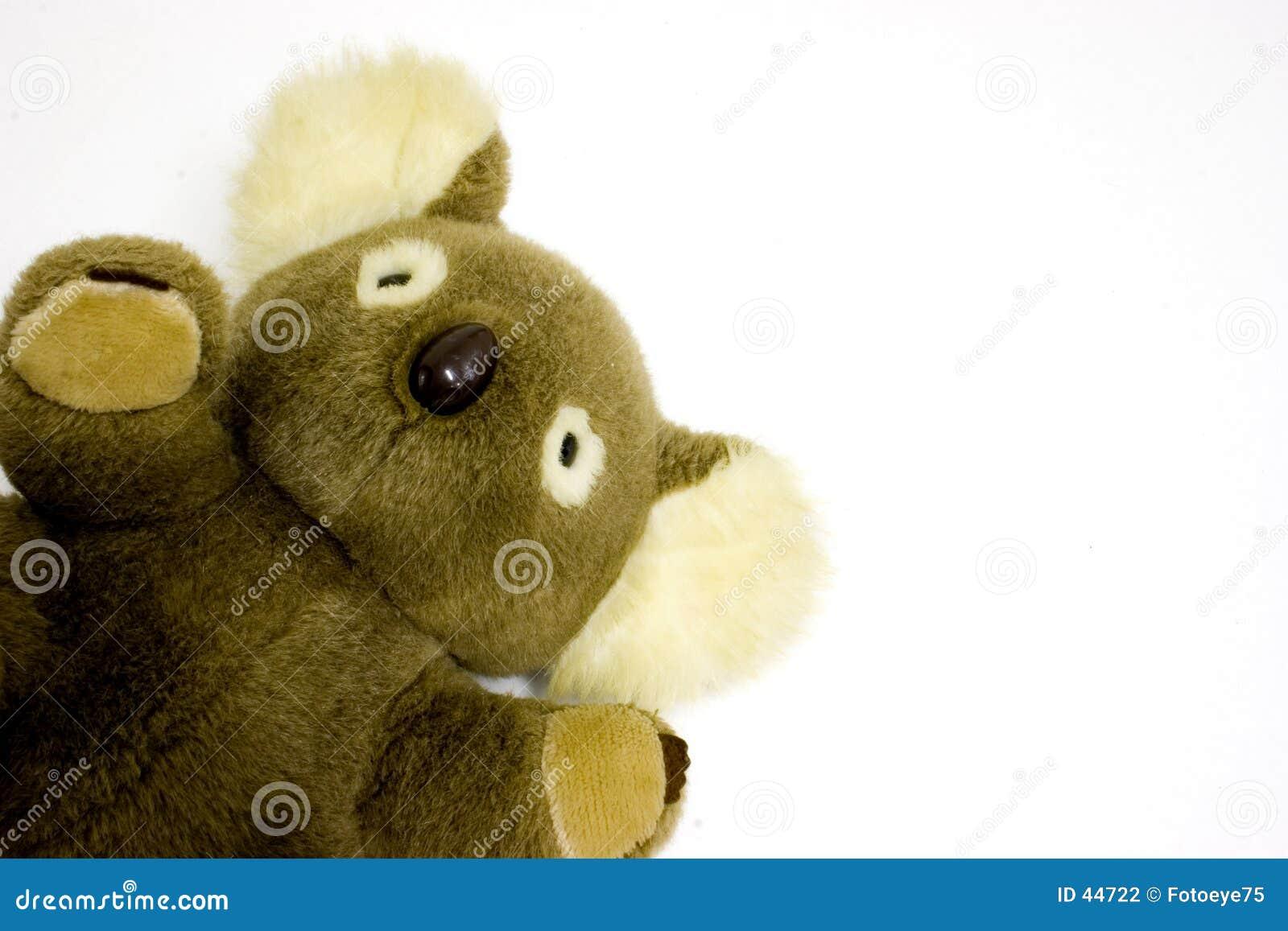 Ours de koala
