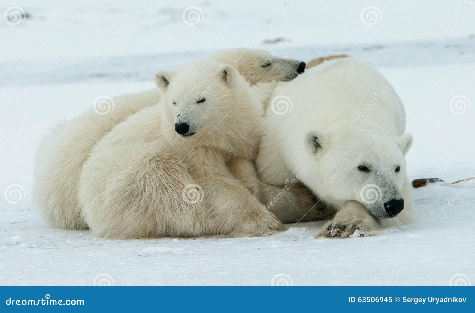 -ours polaire avec des petits animaux Un -ours polaire avec deux petits petits animaux d ours sur la neige