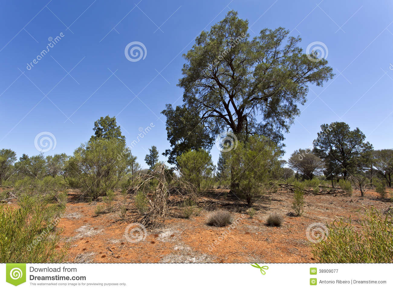 Outback landscape stock image image of wild color sunny for Landscapers adelaide western suburbs