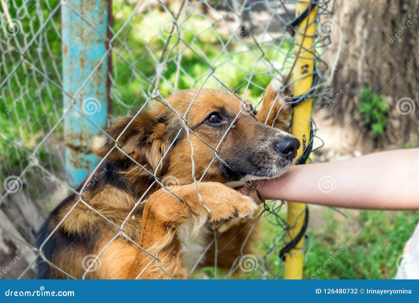 Outddor Dakloze dierlijke schuilplaats Droevige bastaarde hond gelukkige bezoeker s