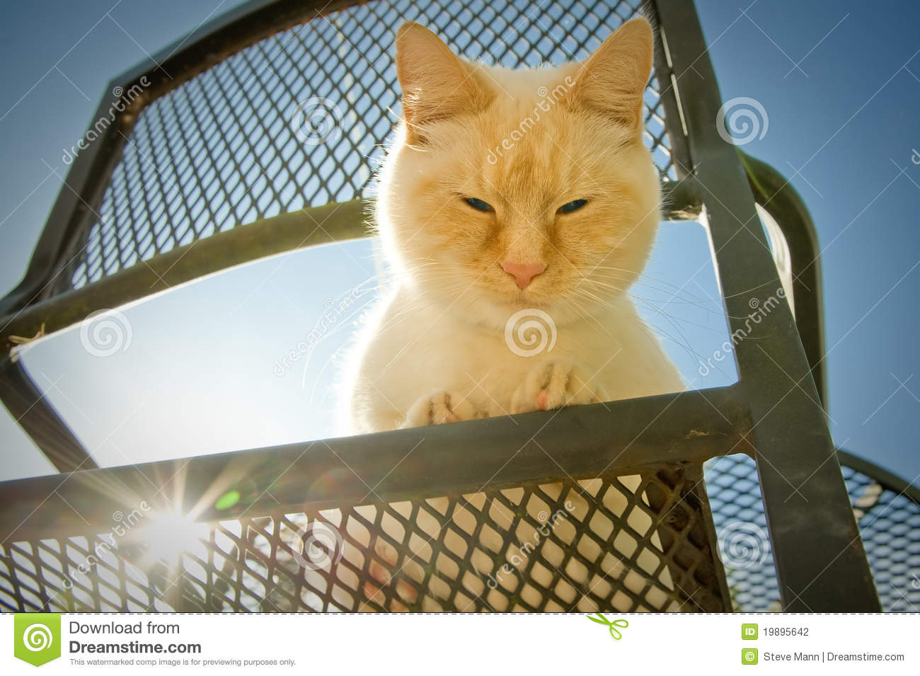 Outdoor cat