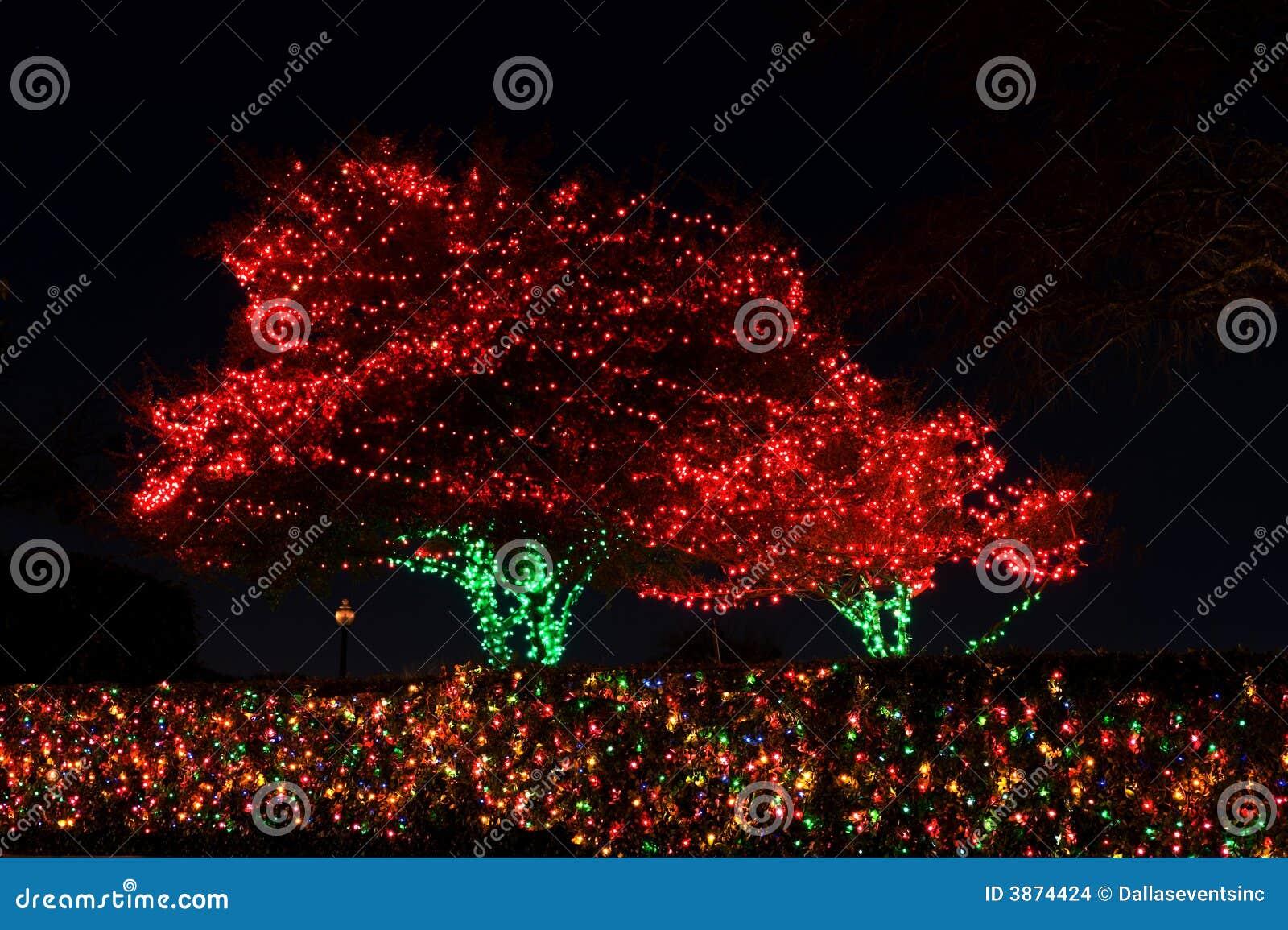Outdoor christmas tree lights stock photo image 3874424 outdoor christmas tree lights mozeypictures Choice Image