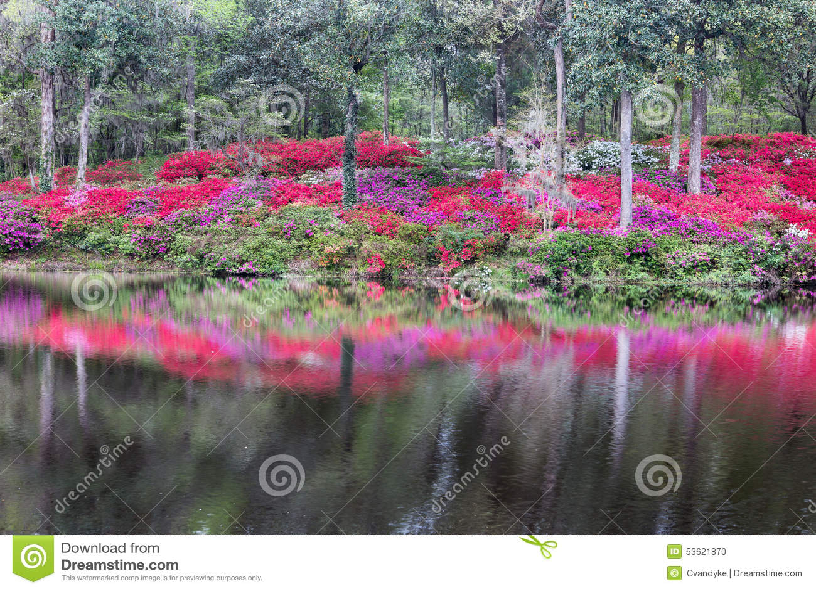 Outdoor Hillside Azalea Garden Water Reflection SC