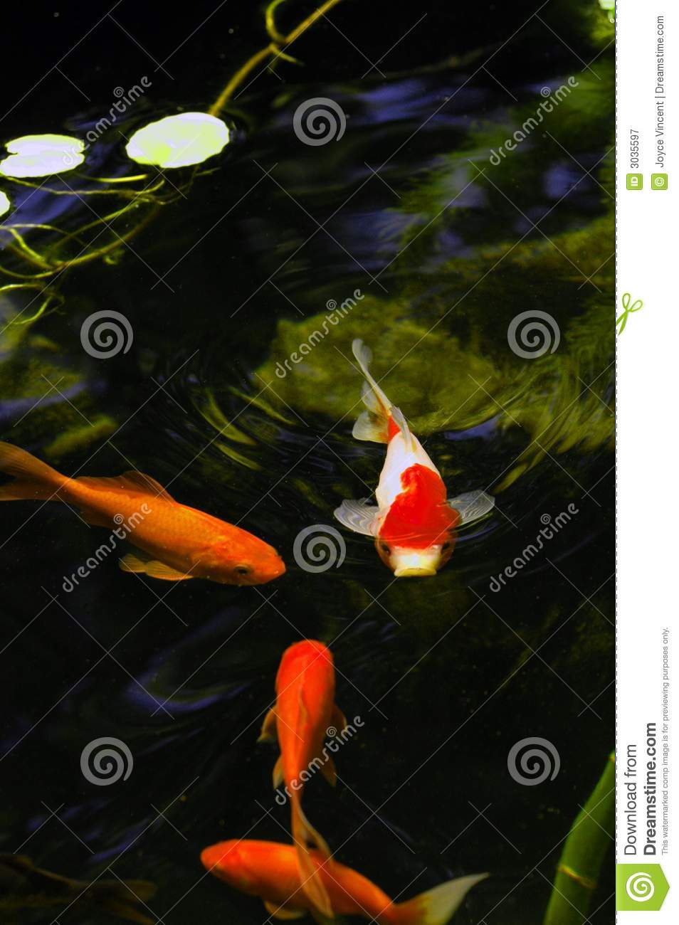 Outdoor koi fish pond stock image image of pond swimming for Koi pond price