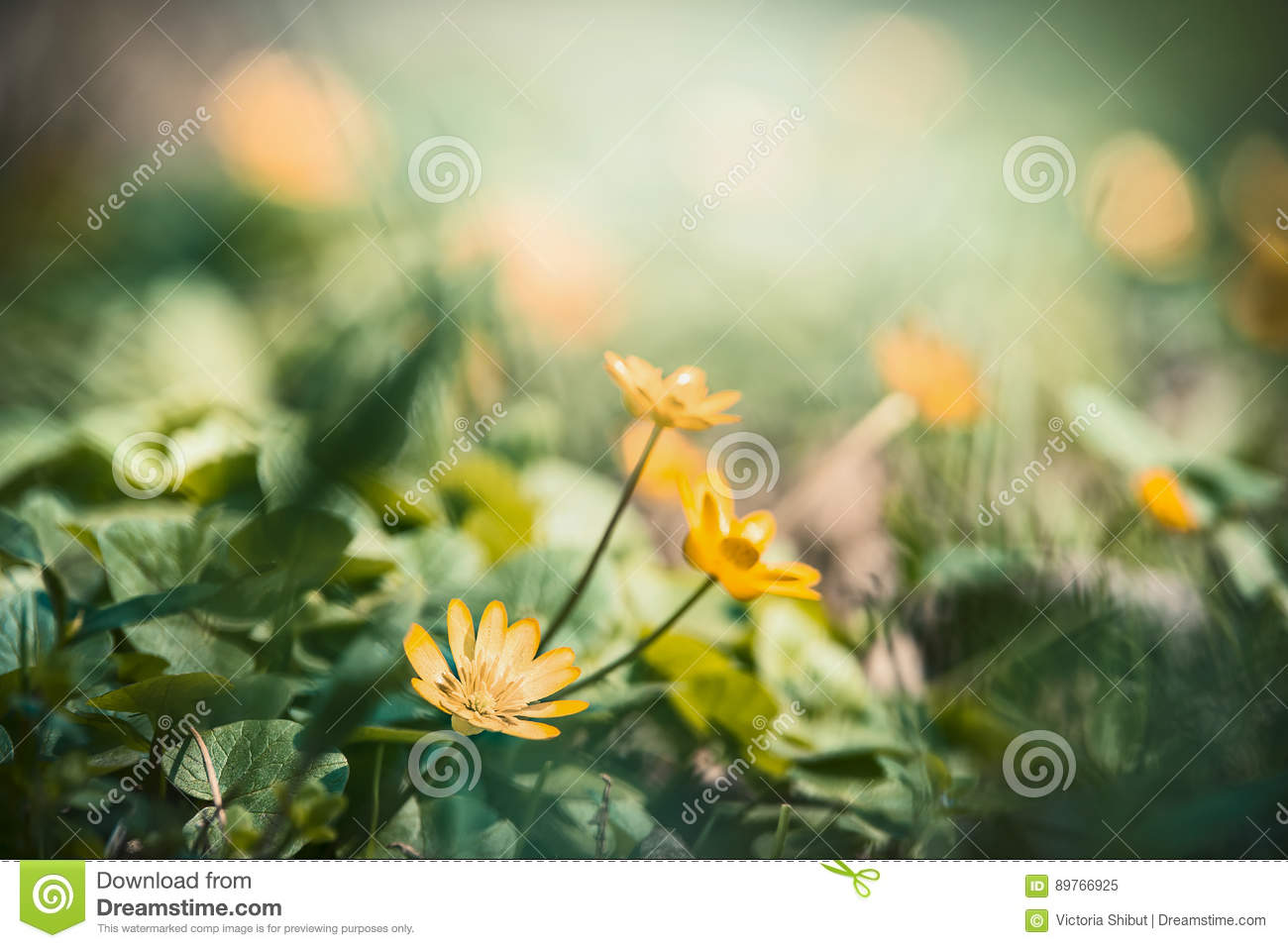 Outdoor Nature Background With Pretty Yellow Flowers Stock Image