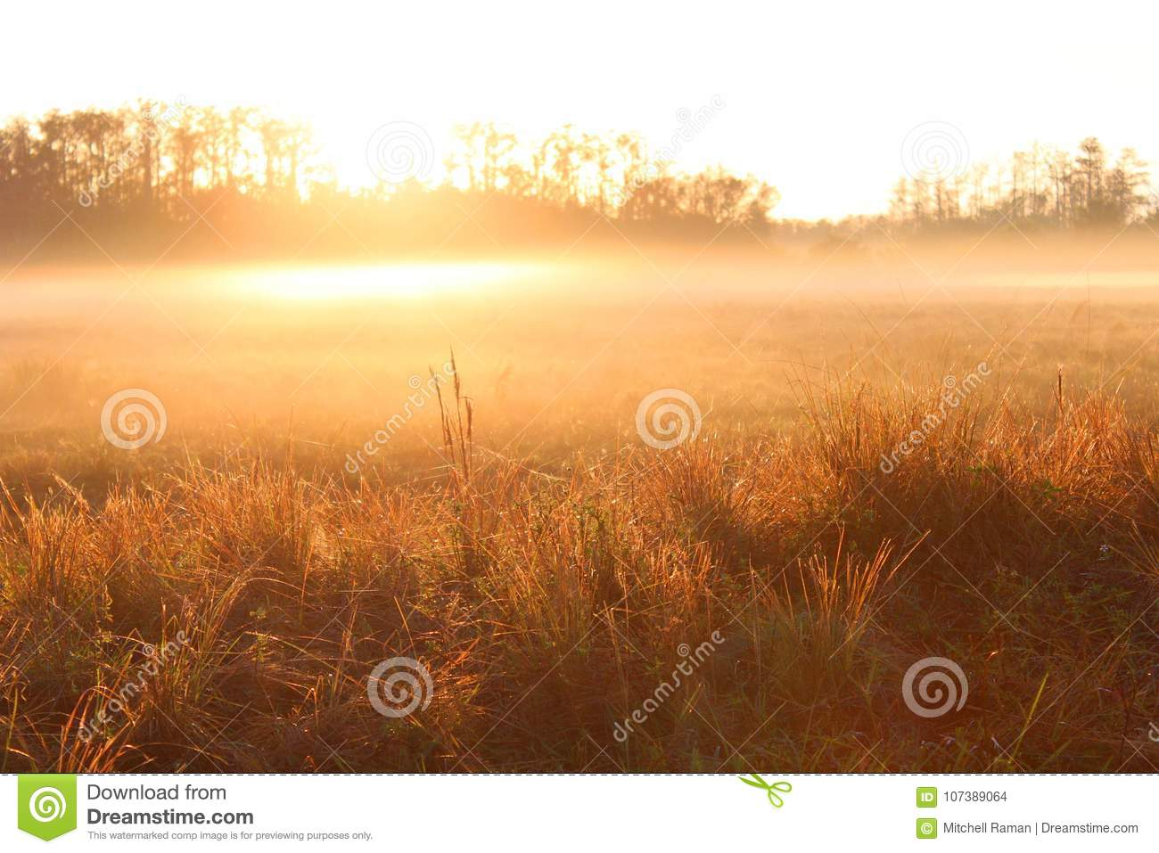 outdoor nature photography. Royalty-Free Stock Photo Outdoor Nature Photography A