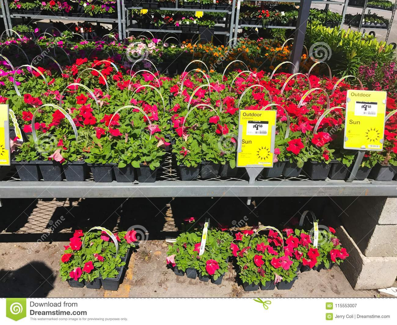 Outdoor Plants For Sale.Outdoor Plants And Flowers On Sale At A Hardware Store