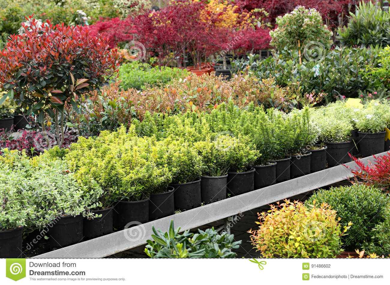 Outdoor Plants For Sale.Outdoor Plants For Sale In The Greenhouse Florist Stock
