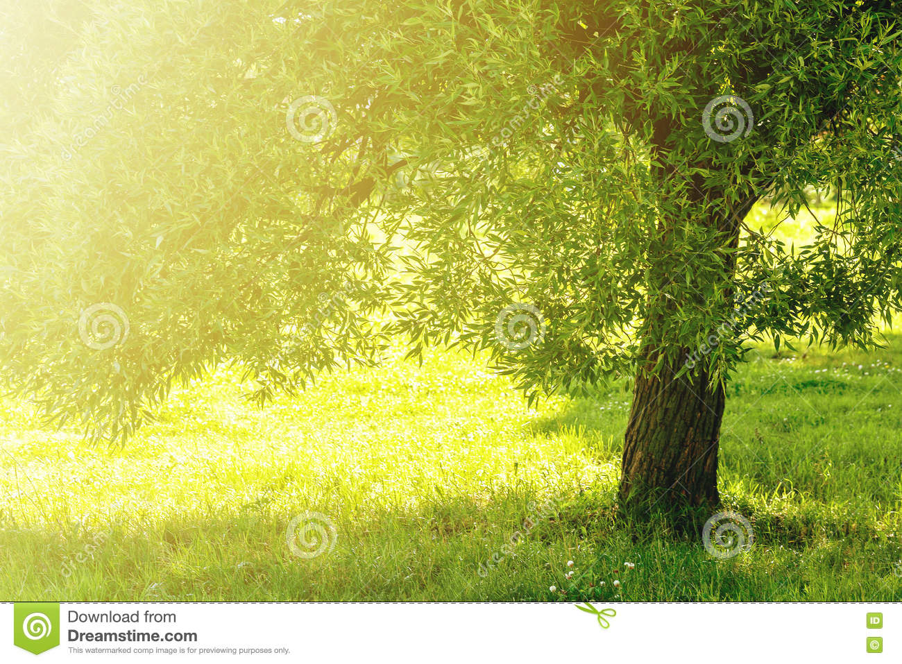 Outdoor Tree Park Nature Green Background Stock Photo Image of