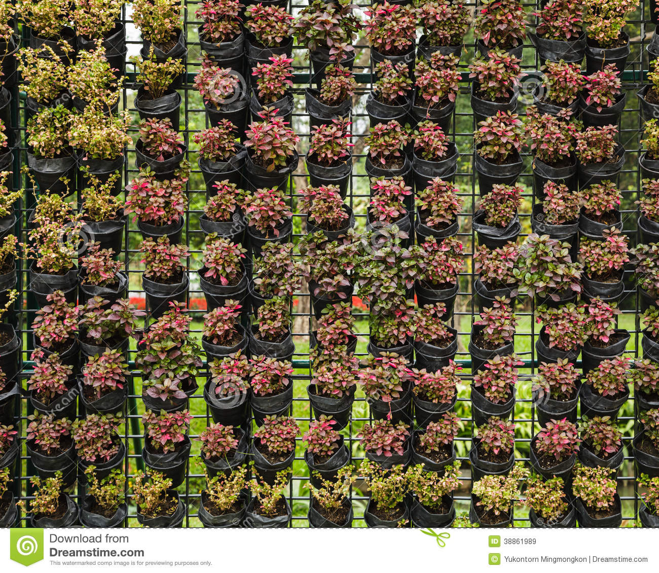 Download Outdoor Vertical Garden Stock Image. Image Of Wall, Growth    38861989