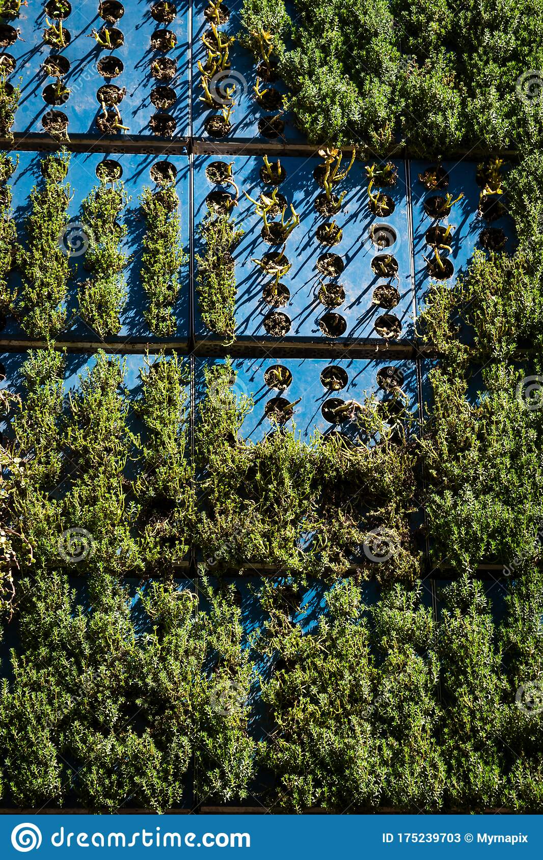 Outdoor Wall Garden With Succuleet Plants Stock Image Image Of Wall Gardening 175239703