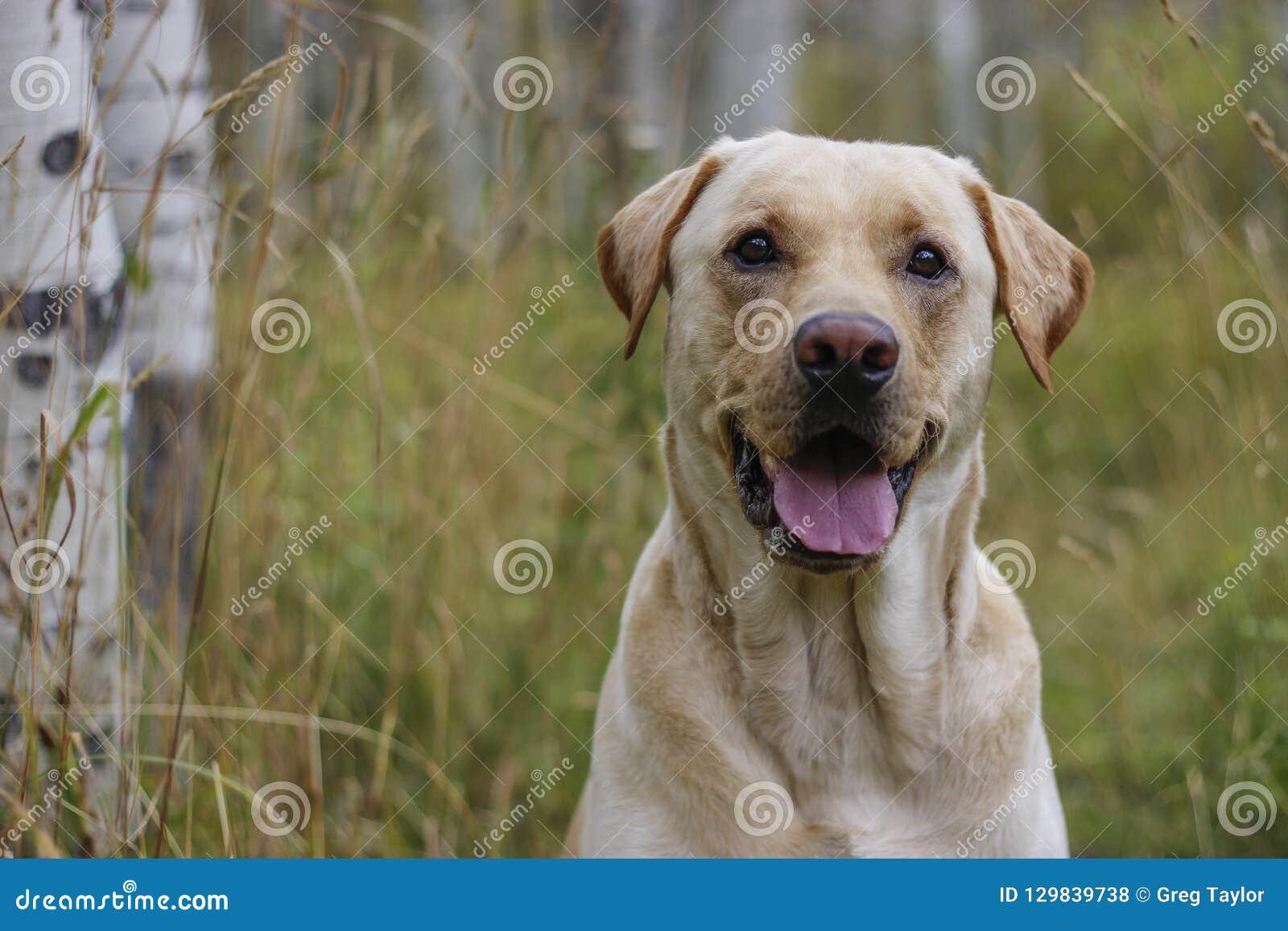 Outdoors pies jest Szczęśliwym psem