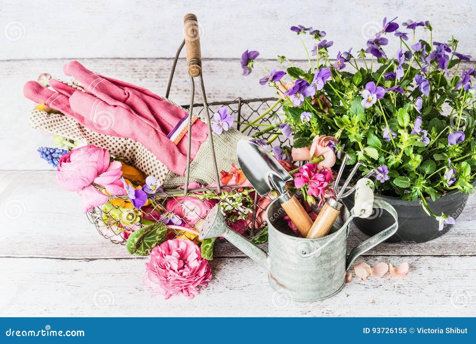 outils de jardin avec la boîte, le panier et les fleurs d'arrosage