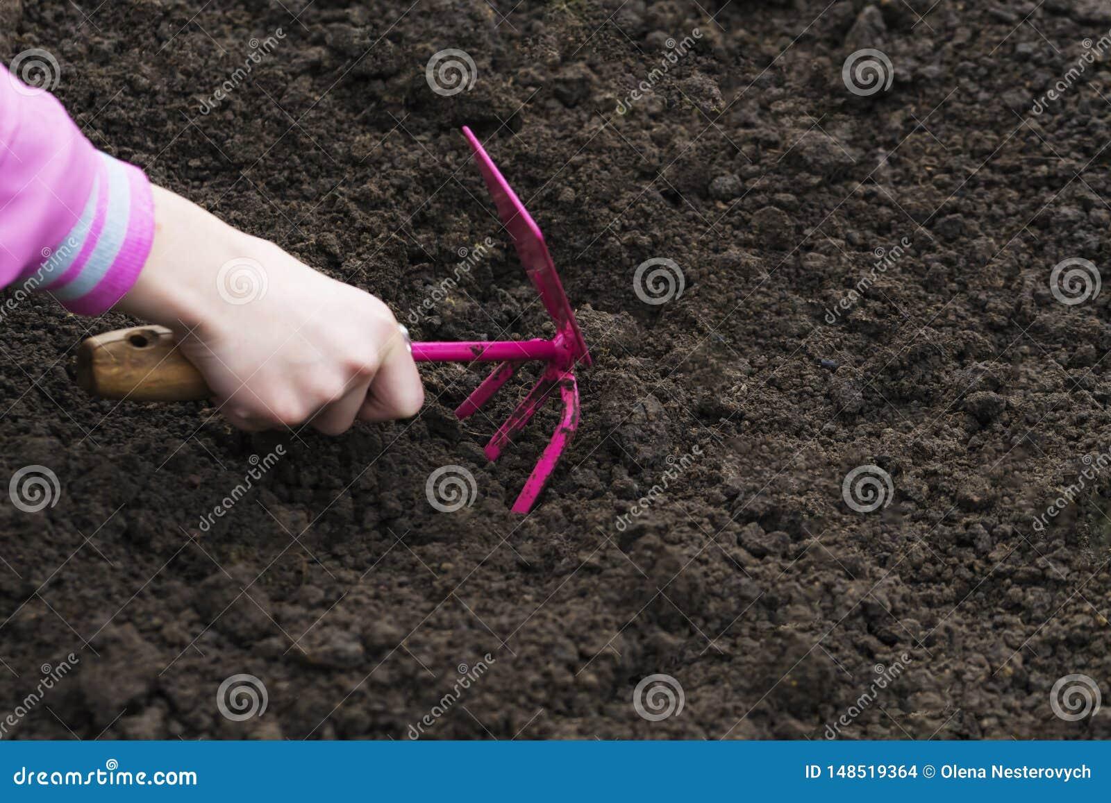 Outils de jardinage dans la main sur le fond de sol Le jardin de ressort fonctionne le concept