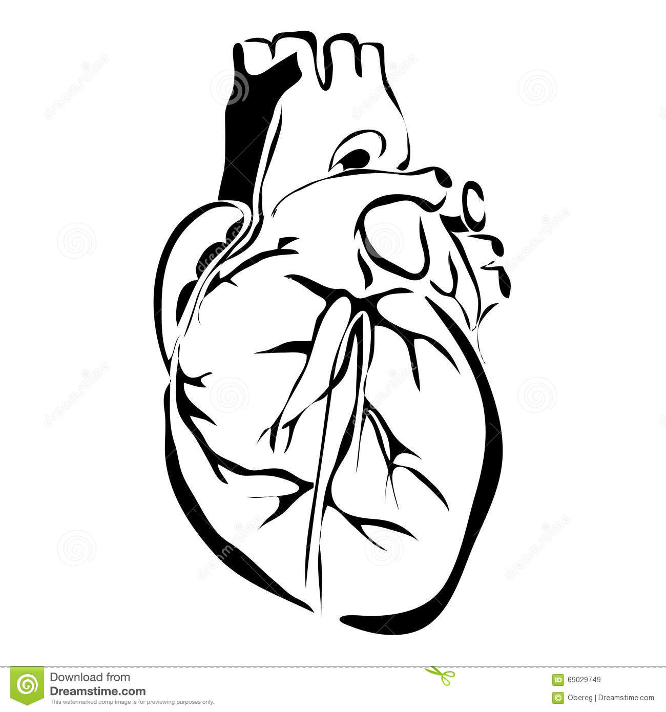 Outline heart human internal organs stock vector illustration of outline heart human internal organs ccuart Gallery