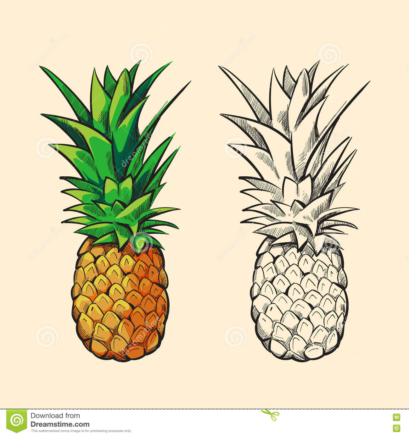 Uncategorized Pineapple Picture To Color outline pineapple and color cartoon vector illustration stock royalty free download color