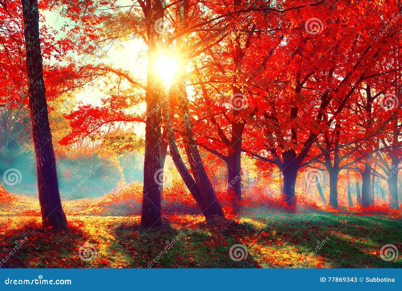 Outono Cena da natureza da queda Parque outonal