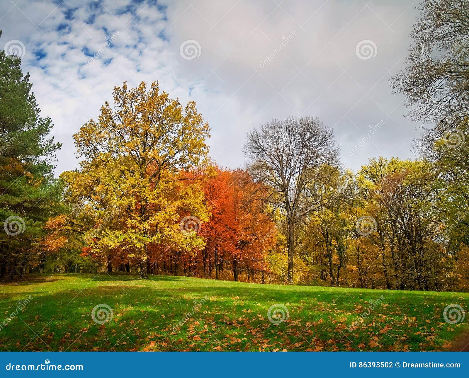 Outono colorido no parque