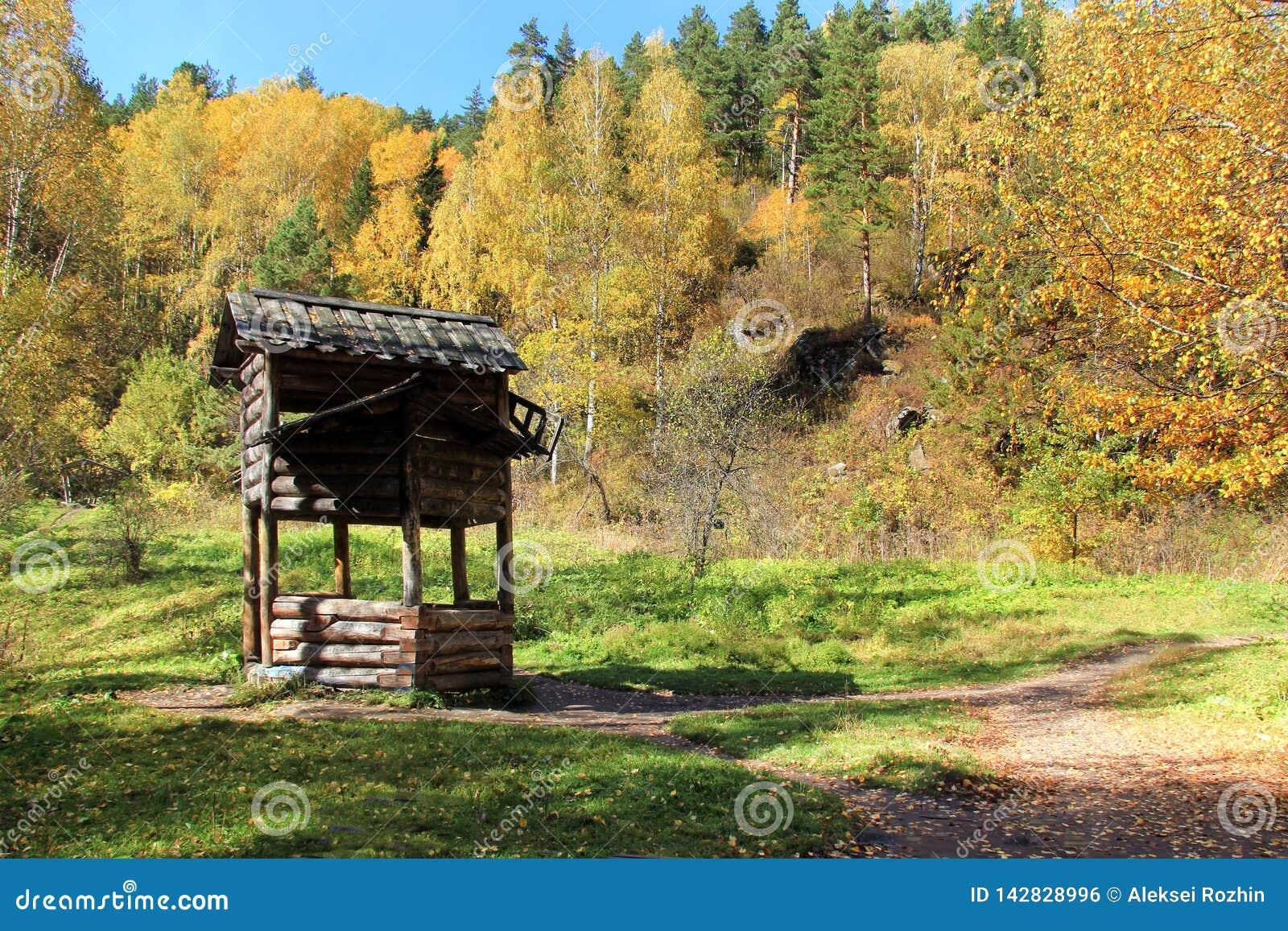 Outono dourado na região de Altai em Rússia Paisagem bonita - estrada na floresta do outono