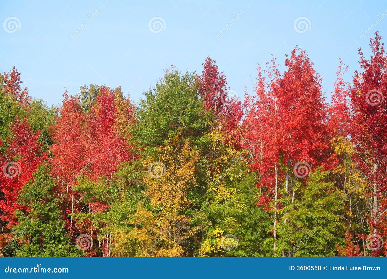 Outono em South Carolina