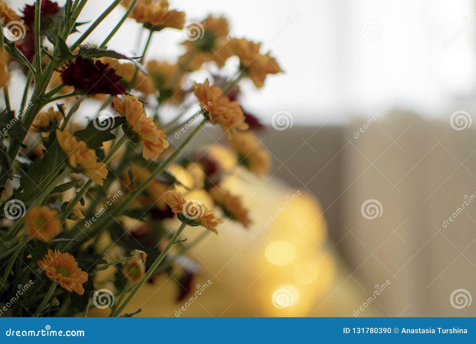 Outono escandinavo decoração inspirada da casa - close up do ramalhete das flores dos mums, sala de visitas acolhedor, Sofa Cushi