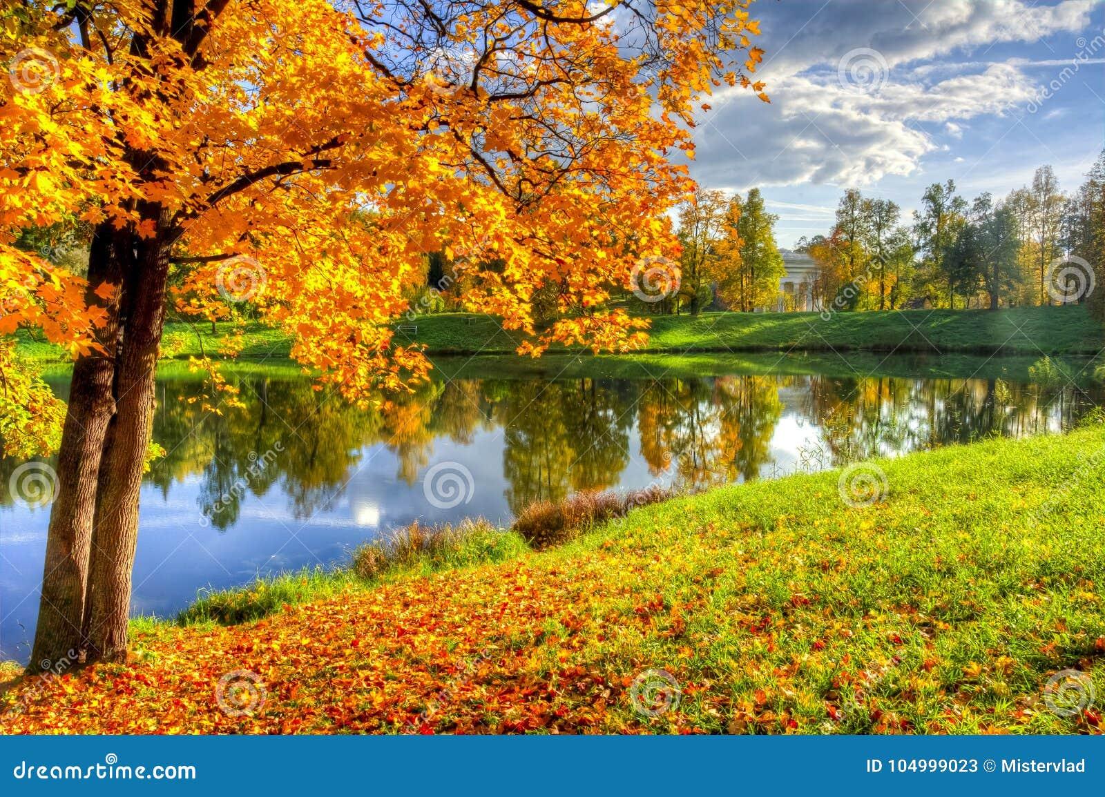 Outono maduro da queda dourada no parque de Pavlovsky, Pavlovsk, St Petersburg, Rússia