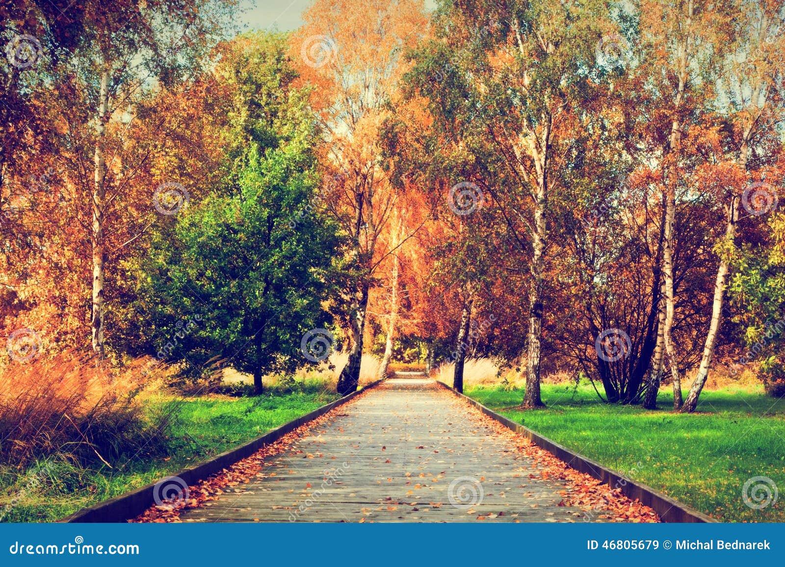 Outono, parque da queda Trajeto de madeira, folhas coloridas em árvores