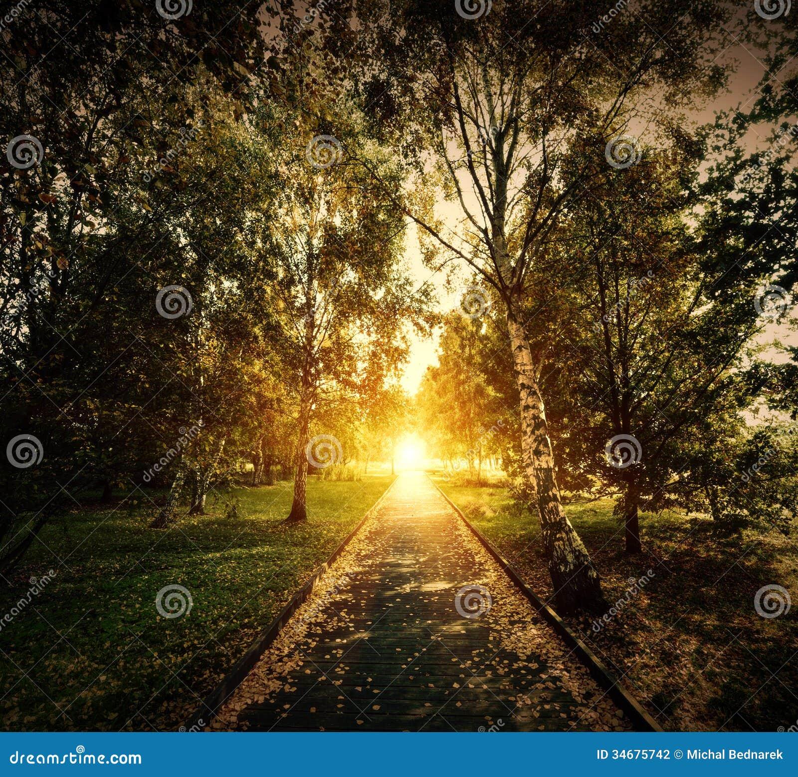 Outono, parque da queda. Trajeto de madeira para o sol