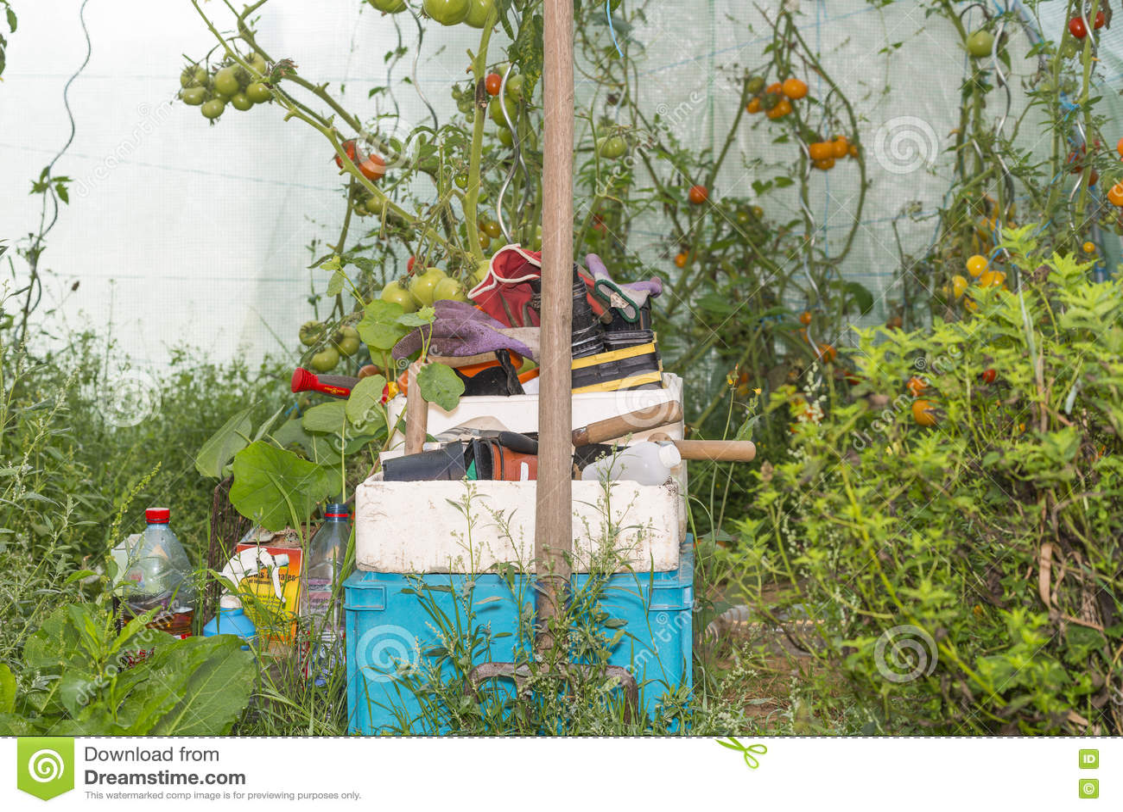 Ouvrez Peu De Serre Chaude Avec Les Plantes Et L\'outil De Tomate ...