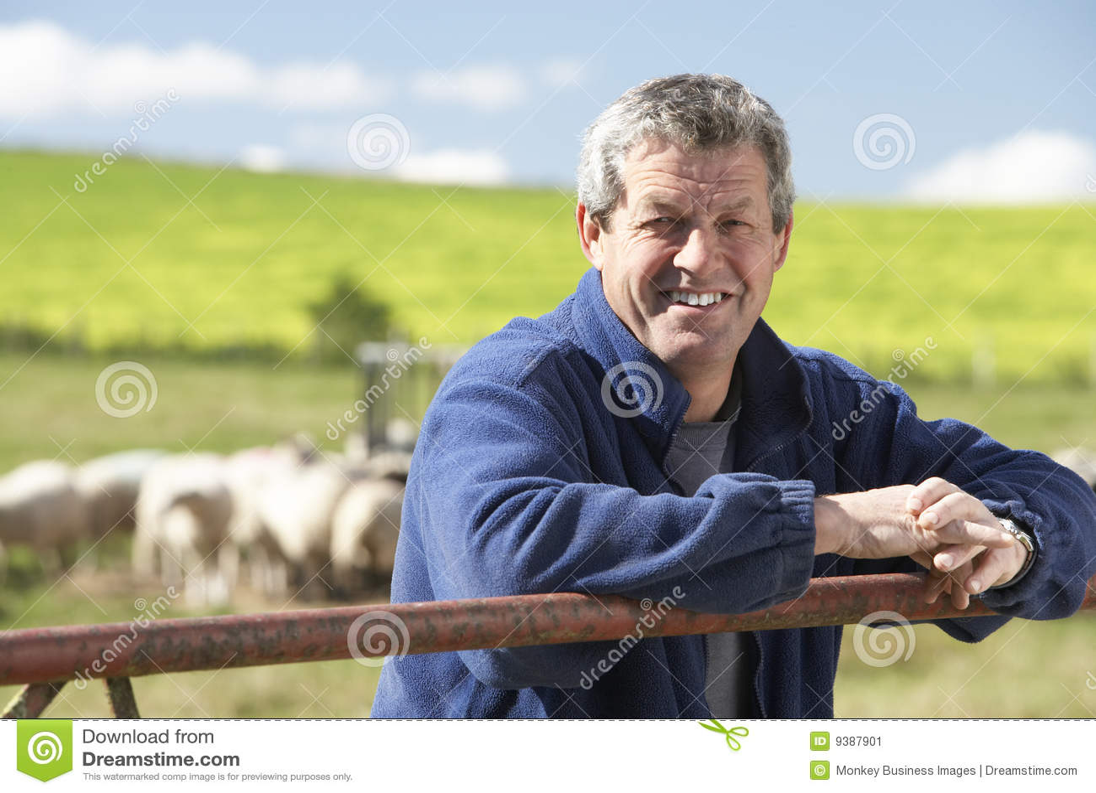 Ouvrier de ferme avec la bande de moutons