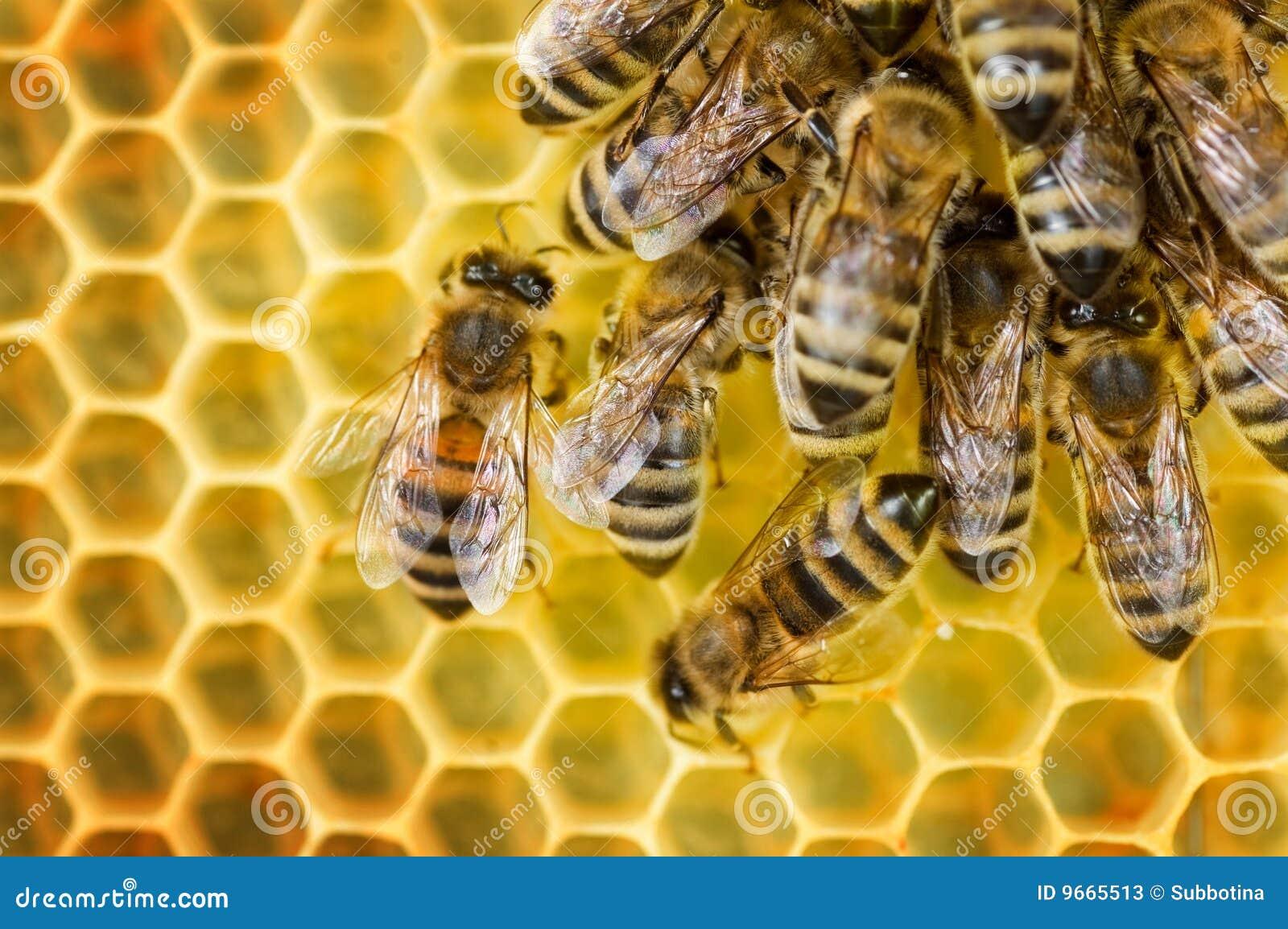 Ouvrier de nid d 39 abeilles d 39 abeilles image stock image du abeilles palpeur 9665513 - Nid d abeille gravier ...