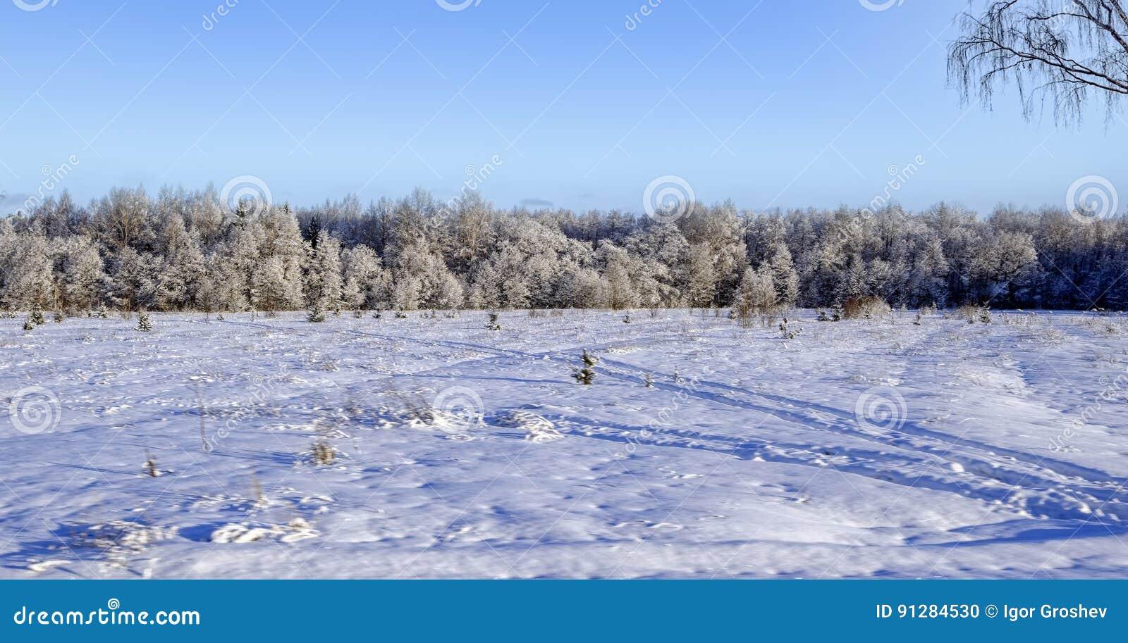 Ovanför skogliggande skjuten snowtreesvinter