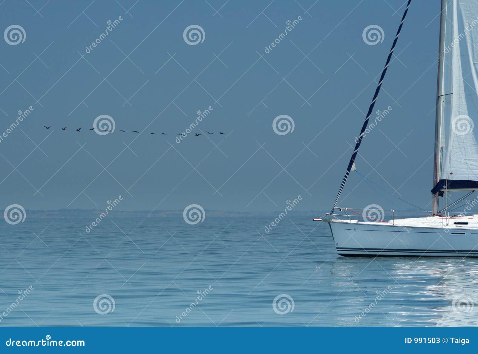 Ovanför yachten för tyst vatten för fågel den vita