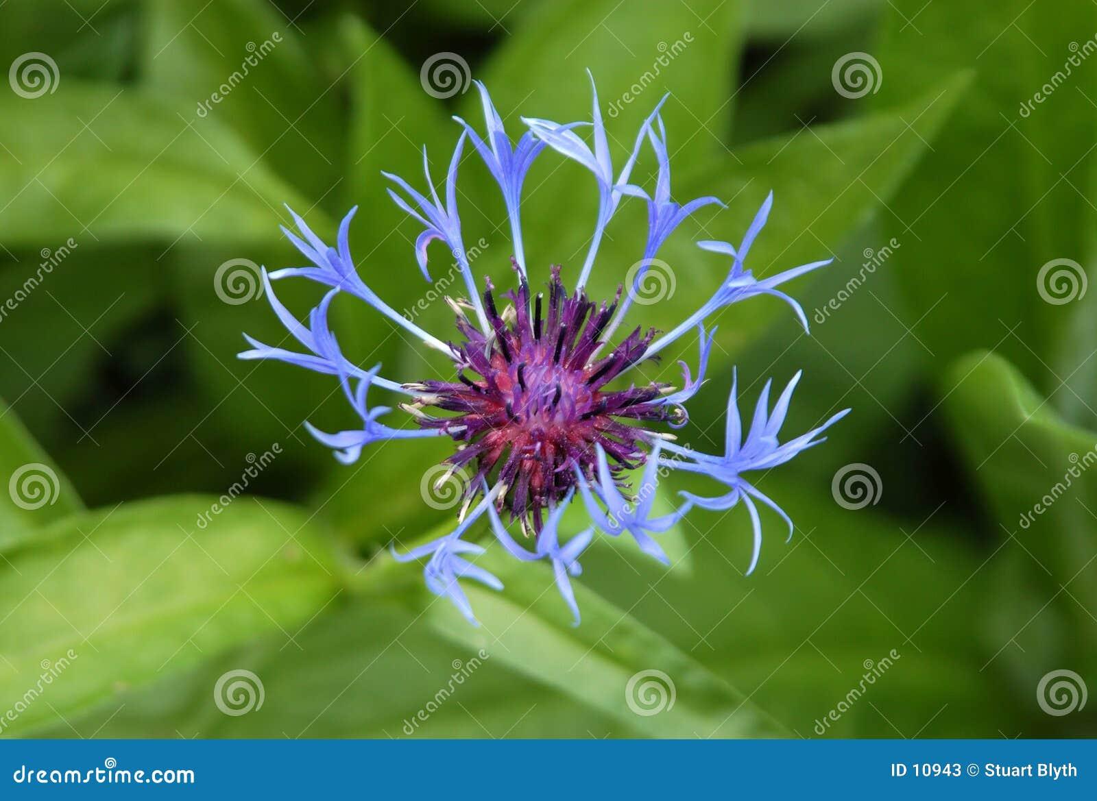 Ovanlig blomma