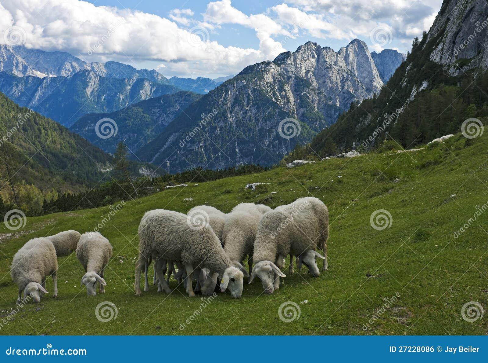 Ovejas en las montan@as, Eslovenia