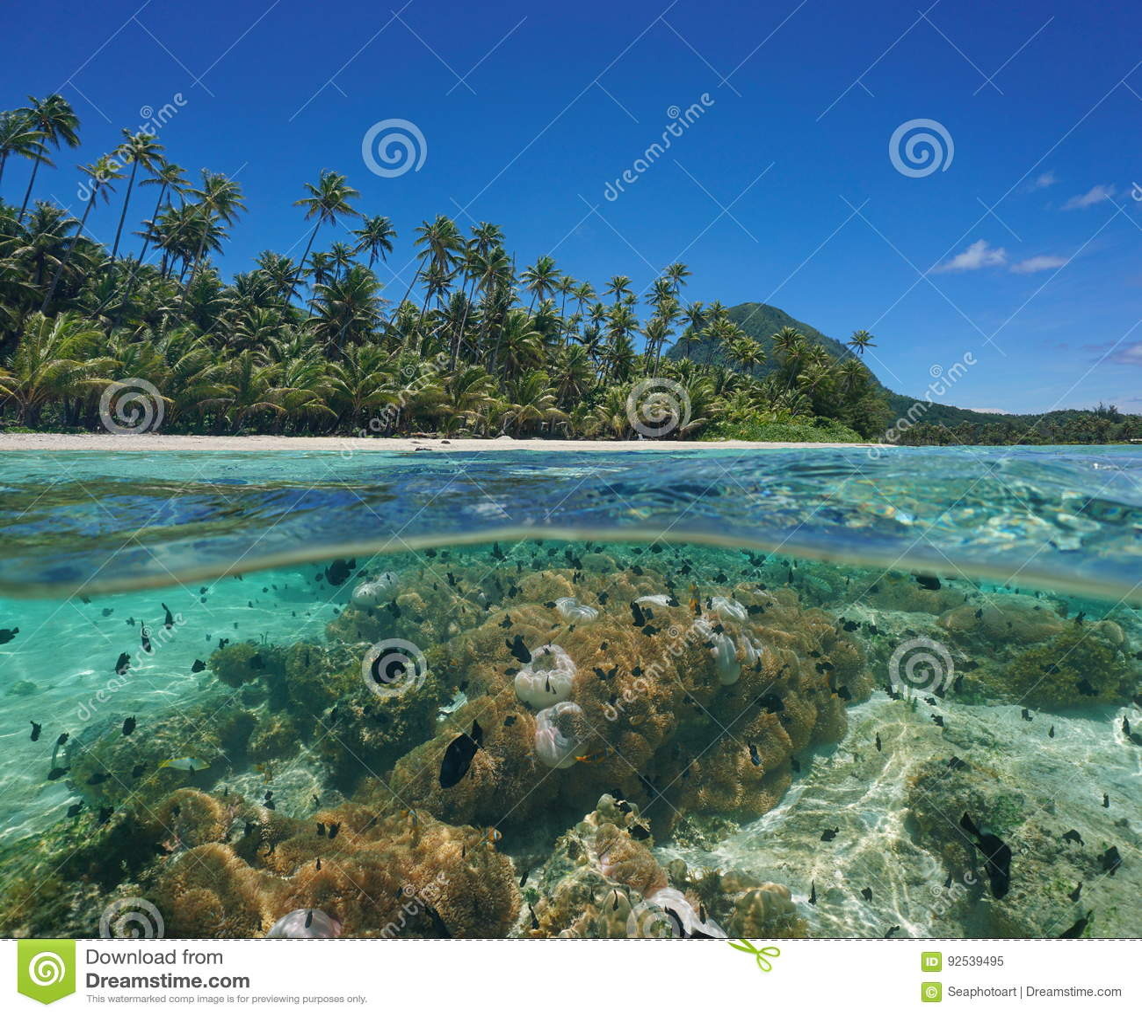 Over under lagoon island sea anemone fish Pacific