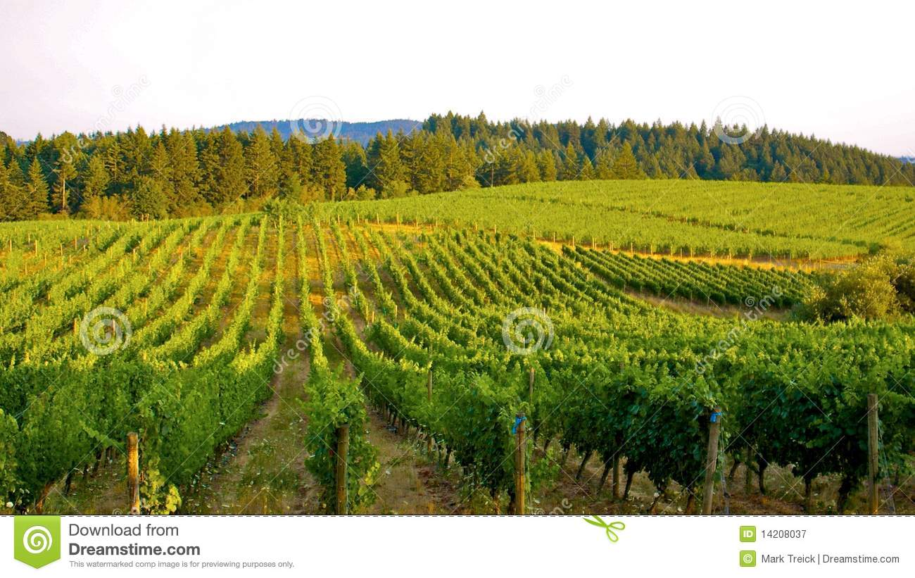 Over the Vineyard