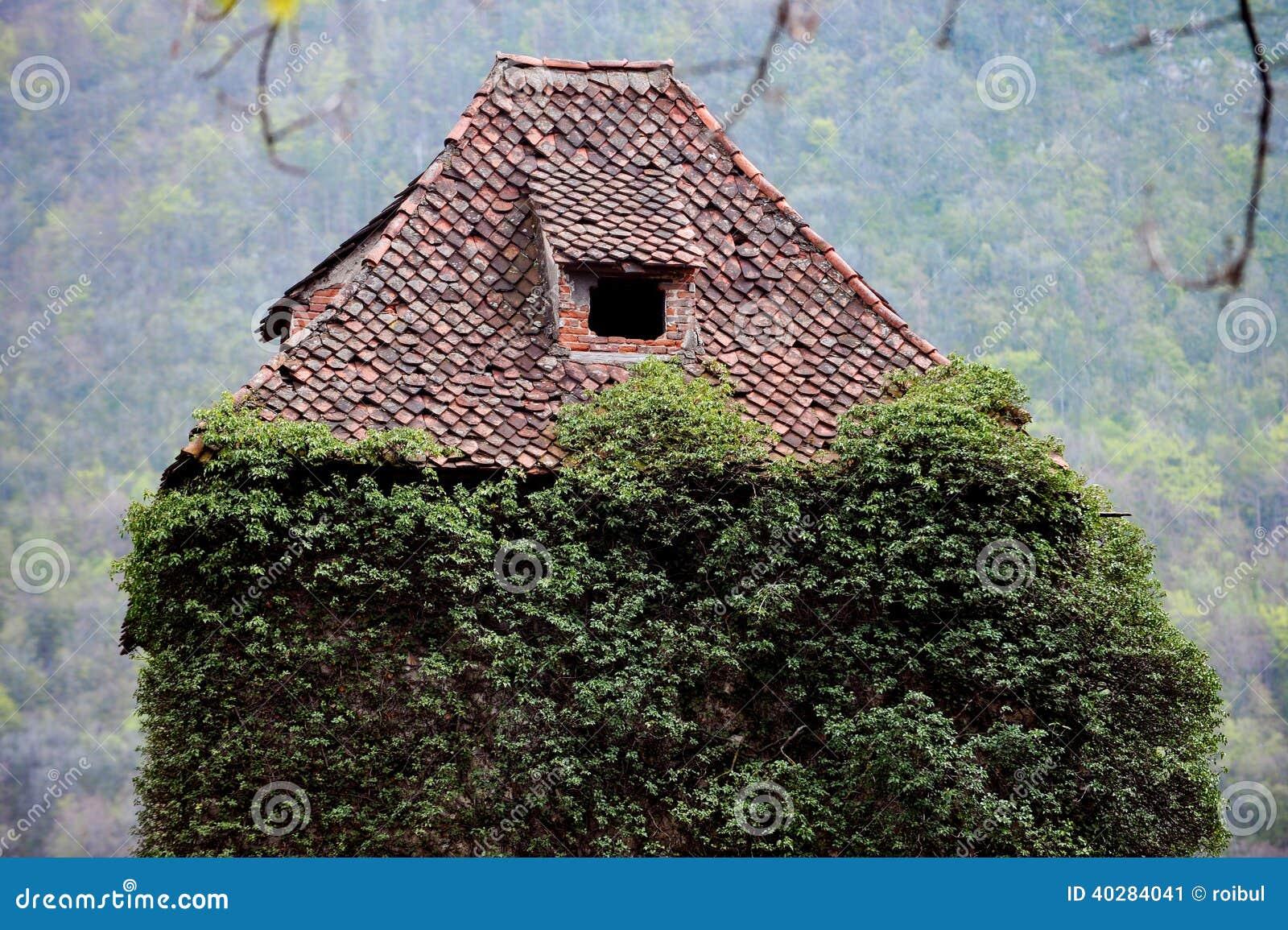 Overgrown плющ на покинутом доме