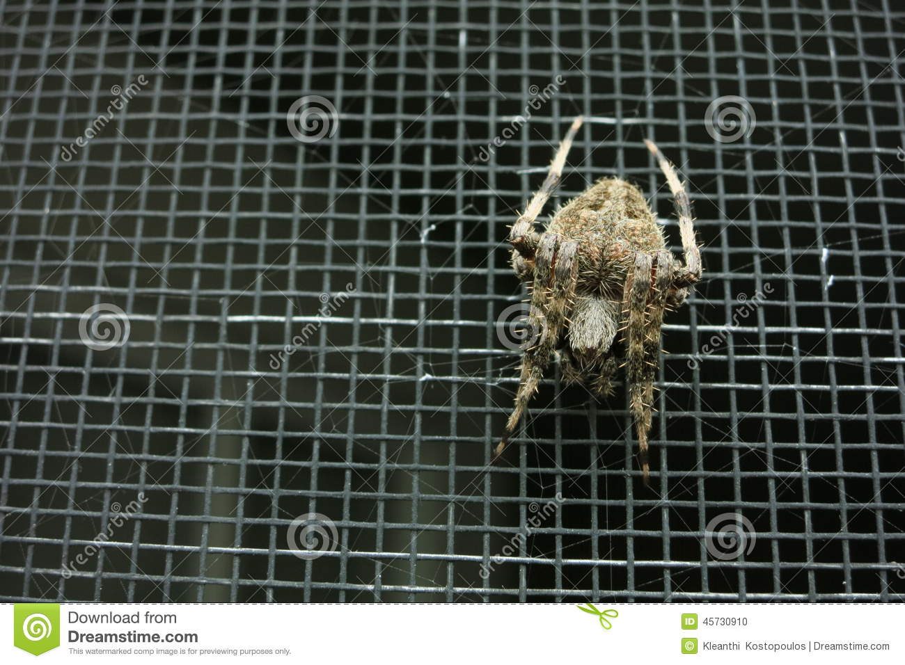 Overhead View Of Spider On A Screen Door Stock Photo Image Of