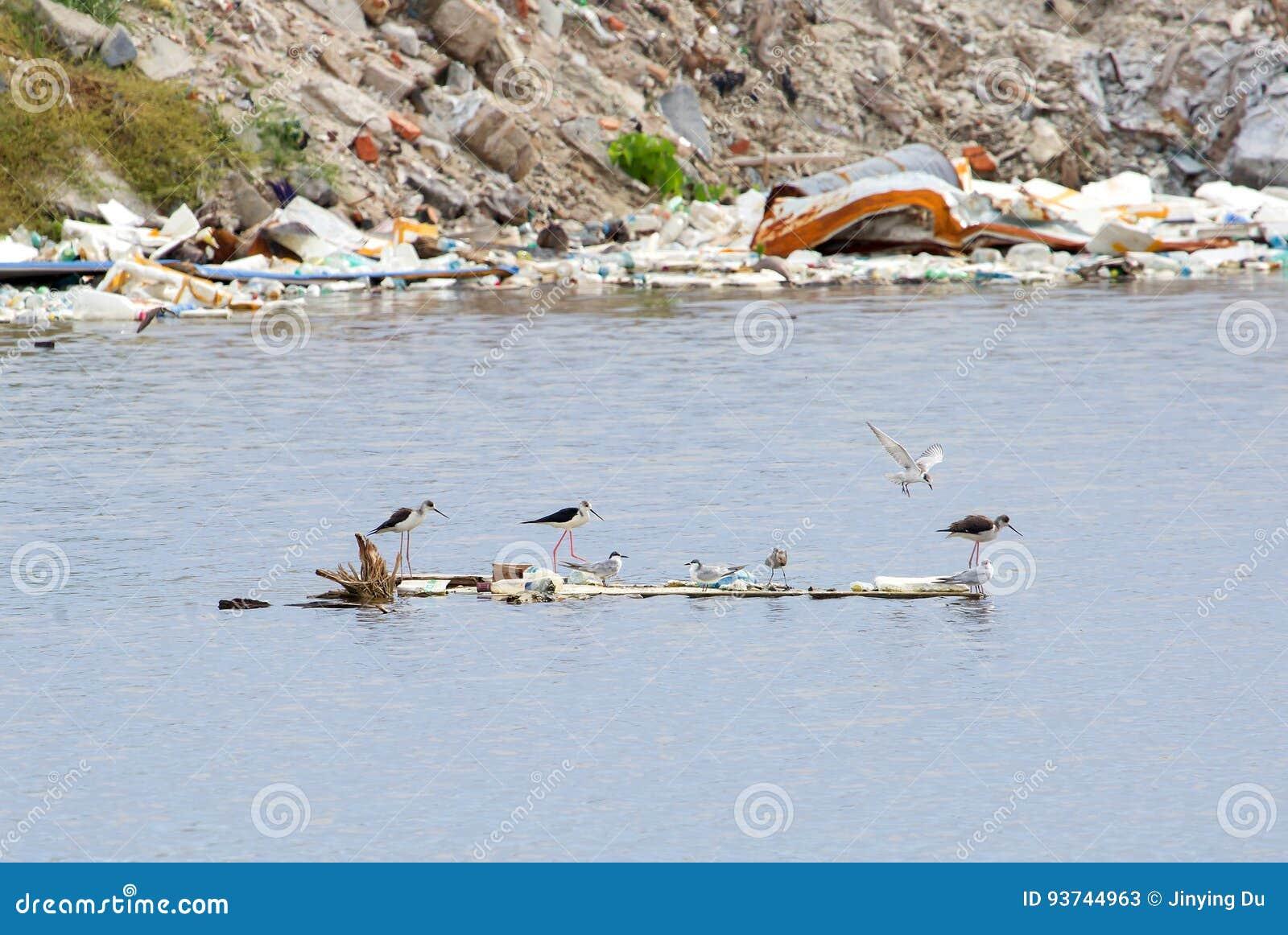 Verwonderlijk Overleefde Vogels Die Voedsel Na Tyfoon Zoeken Stock Afbeelding MH-03